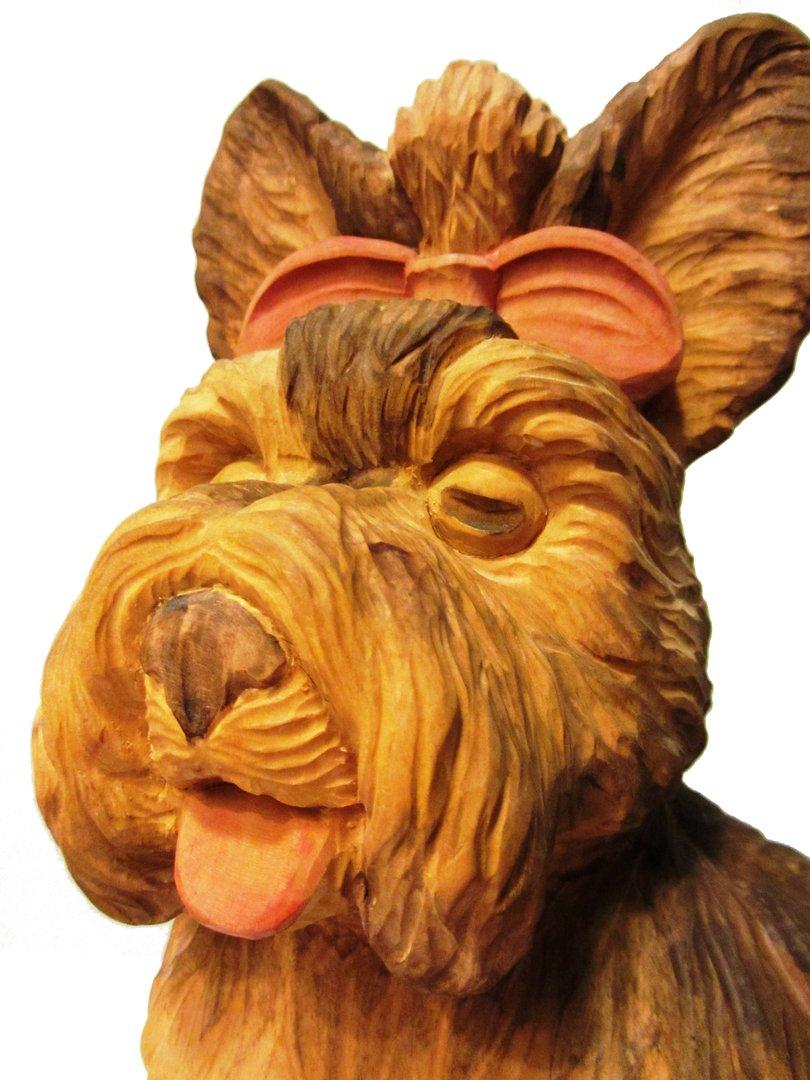 gewicht yorkshire terrier